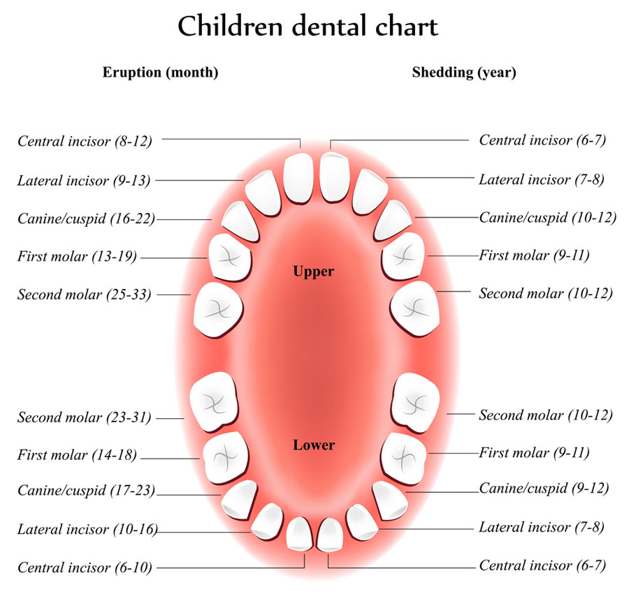 dentalchartchildren